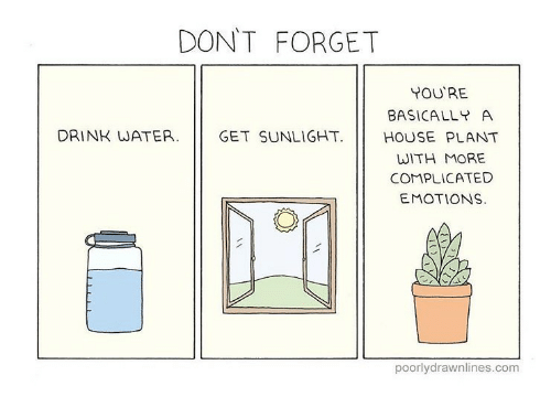 dont-forget-youre-basically-a-drink-water-get-sunlight-house-28887210